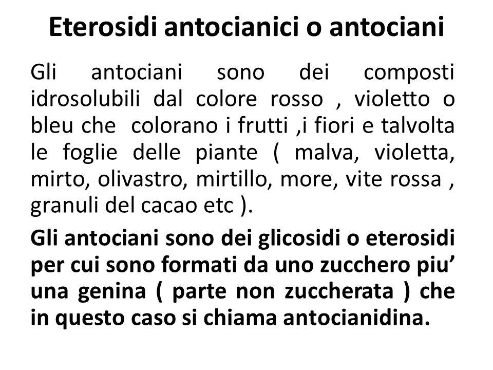 Eterosidi antocianici o antociani