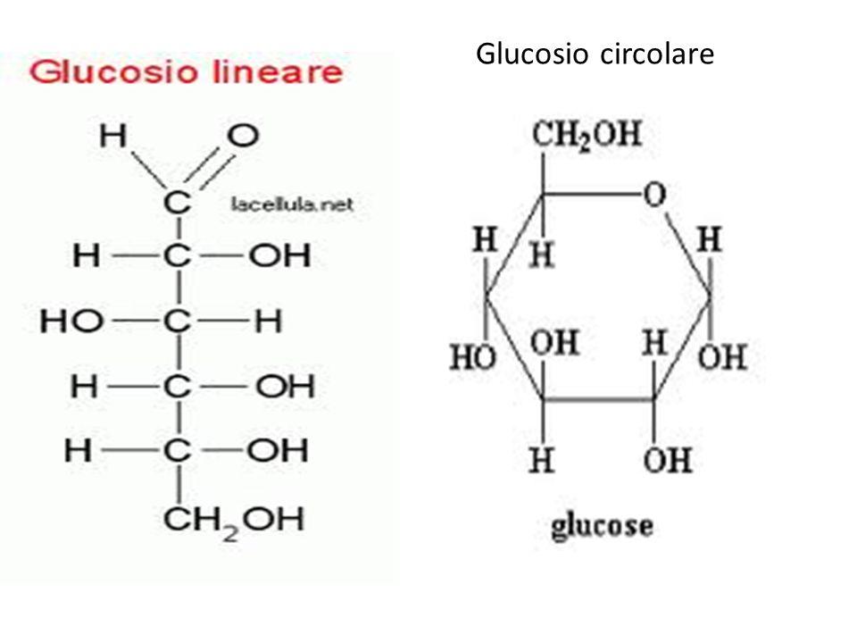 Glucosio circolare