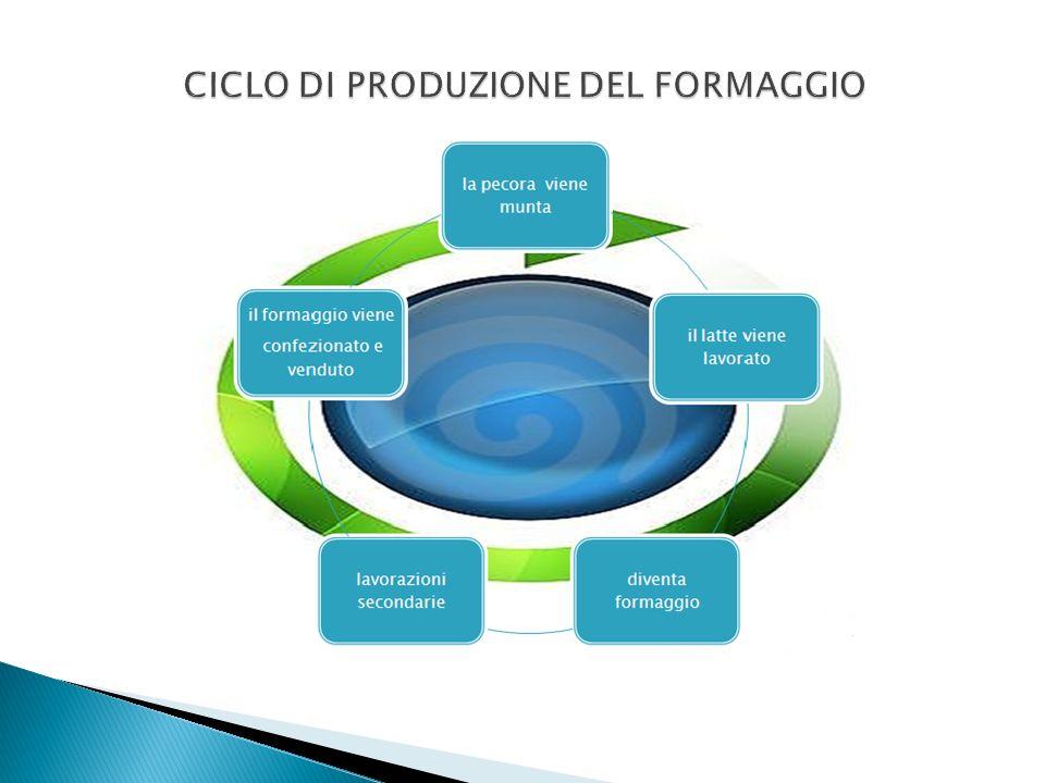 CICLO DI PRODUZIONE DEL FORMAGGIO