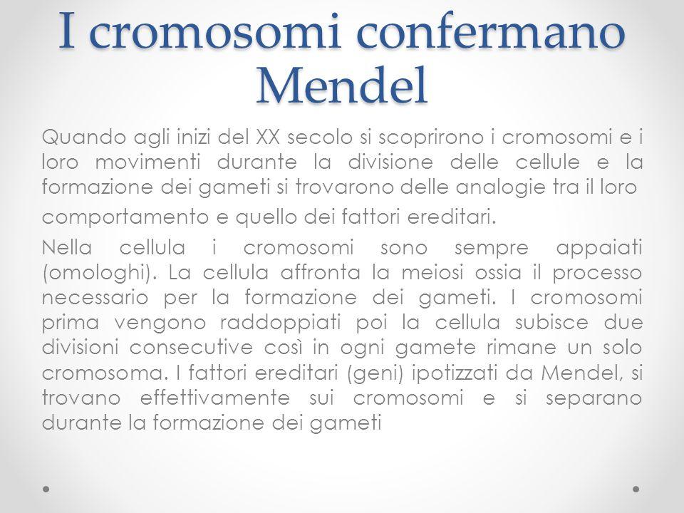 I cromosomi confermano Mendel