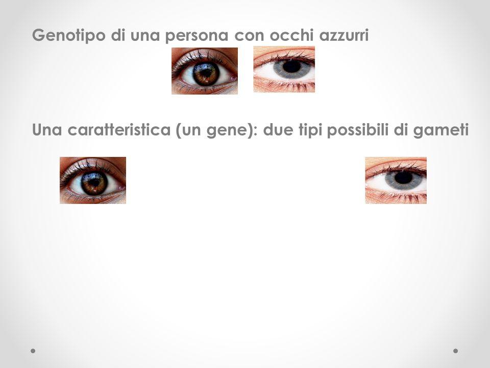 Genotipo di una persona con occhi azzurri Una caratteristica (un gene): due tipi possibili di gameti