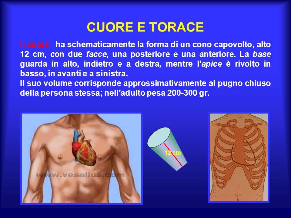 CUORE E TORACE