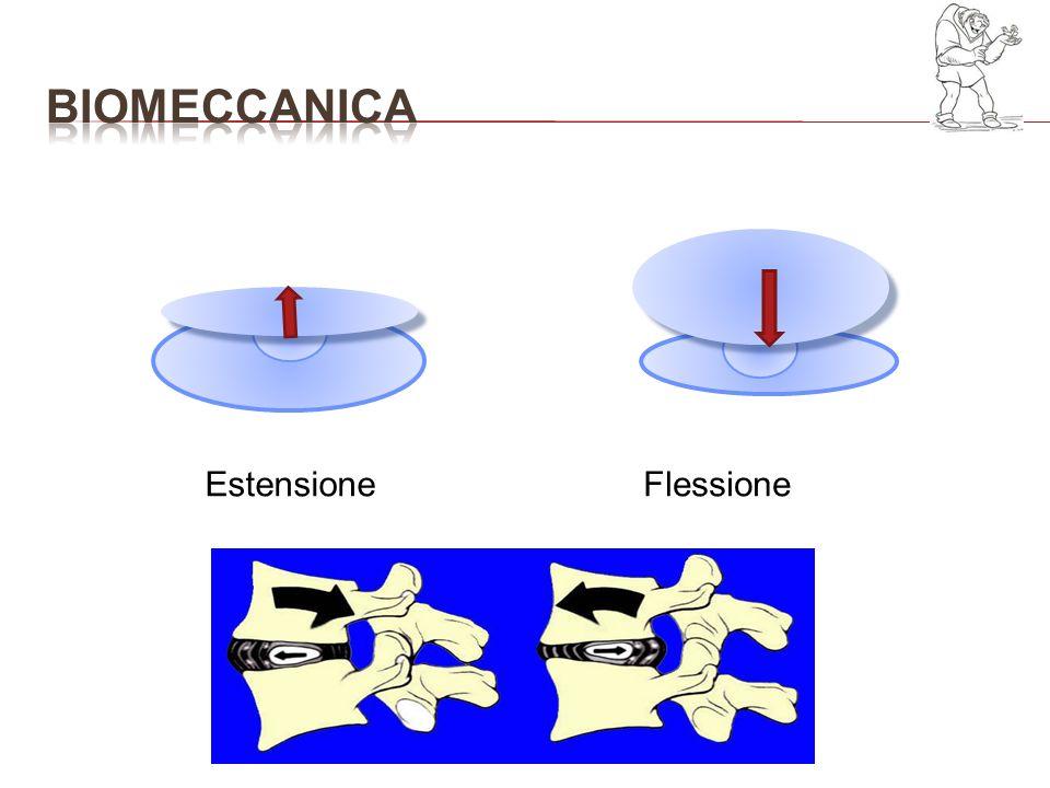 bioMECCANICA Estensione Flessione Traslazione