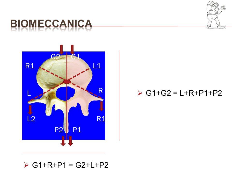 BIOMECCANICA G2 G1 R1 L1 R L G1+G2 = L+R+P1+P2 L2 R1 P2 P1