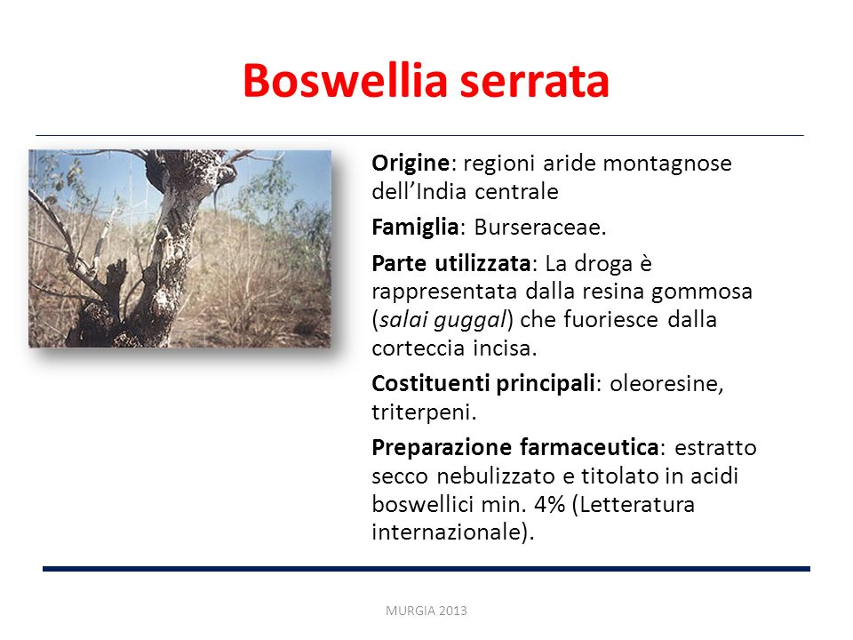 Boswellia serrata Origine: regioni aride montagnose dell'India centrale. Famiglia: Burseraceae.