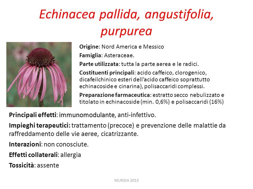 Echinacea pallida, angustifolia, purpurea