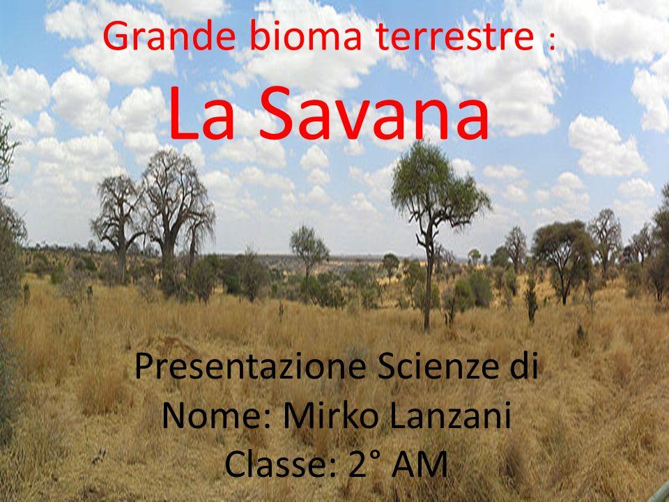 Grande bioma terrestre : La Savana