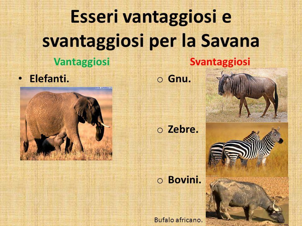 Esseri vantaggiosi e svantaggiosi per la Savana