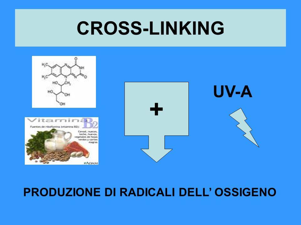 CROSS-LINKING UV-A + PRODUZIONE DI RADICALI DELL' OSSIGENO