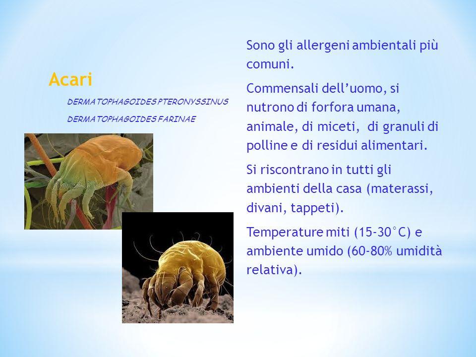 Acari Sono gli allergeni ambientali più comuni.