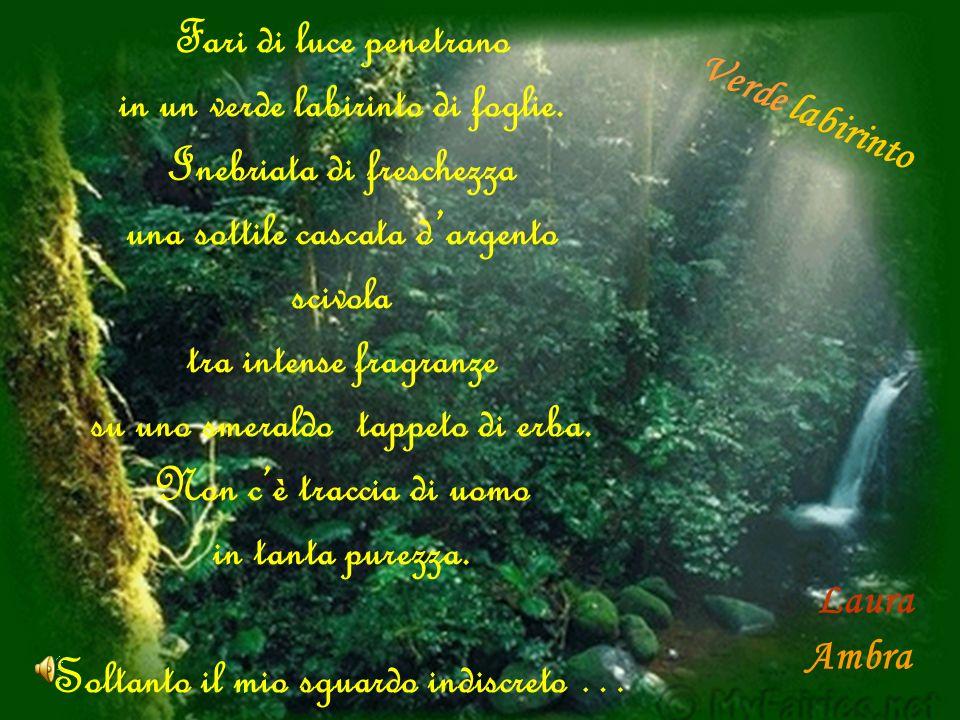 Laura Fari di luce penetrano in un verde labirinto di foglie.