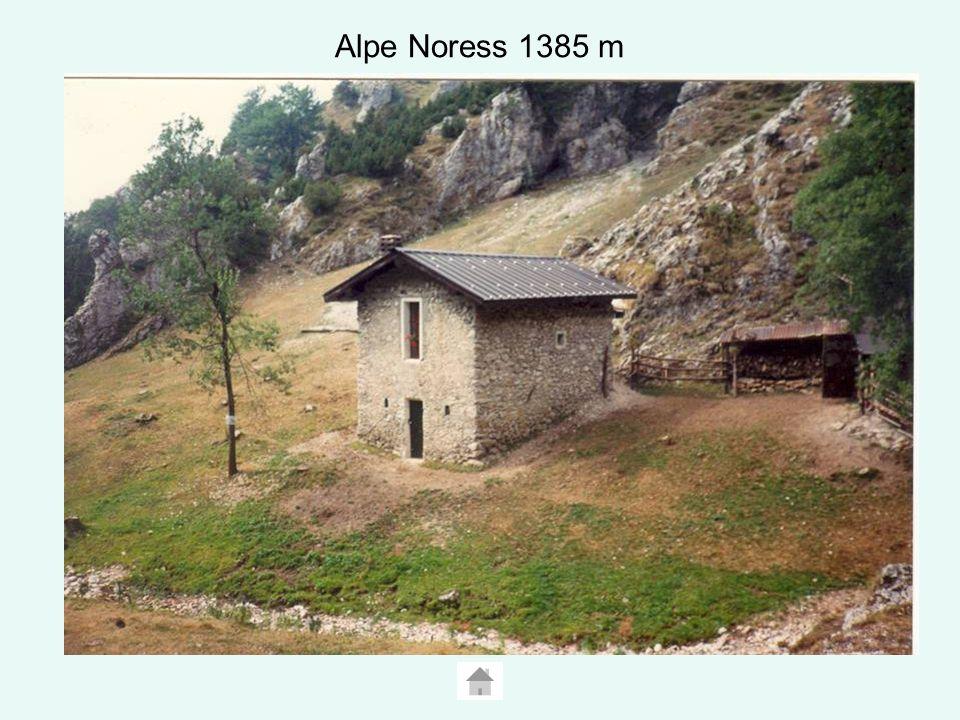 Alpe Noress 1385 m