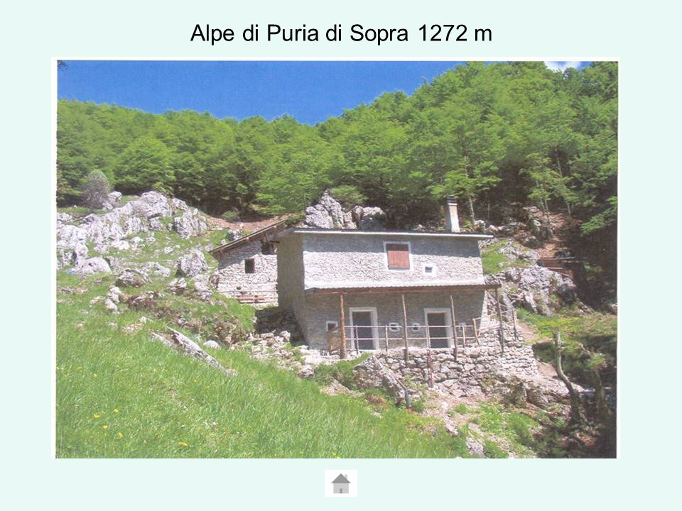 Alpe di Puria di Sopra 1272 m