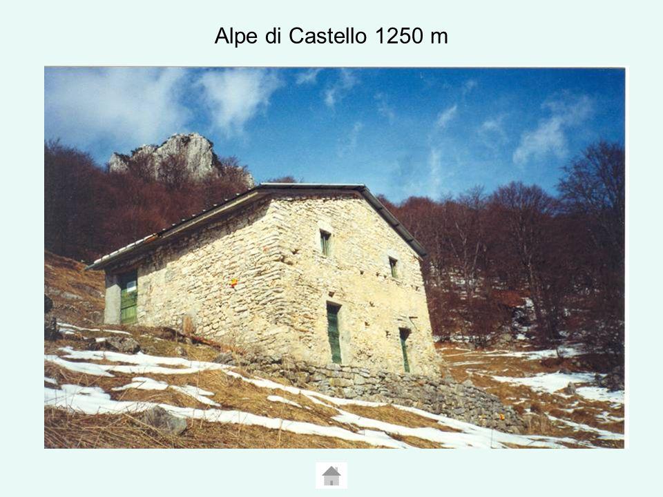 Alpe di Castello 1250 m