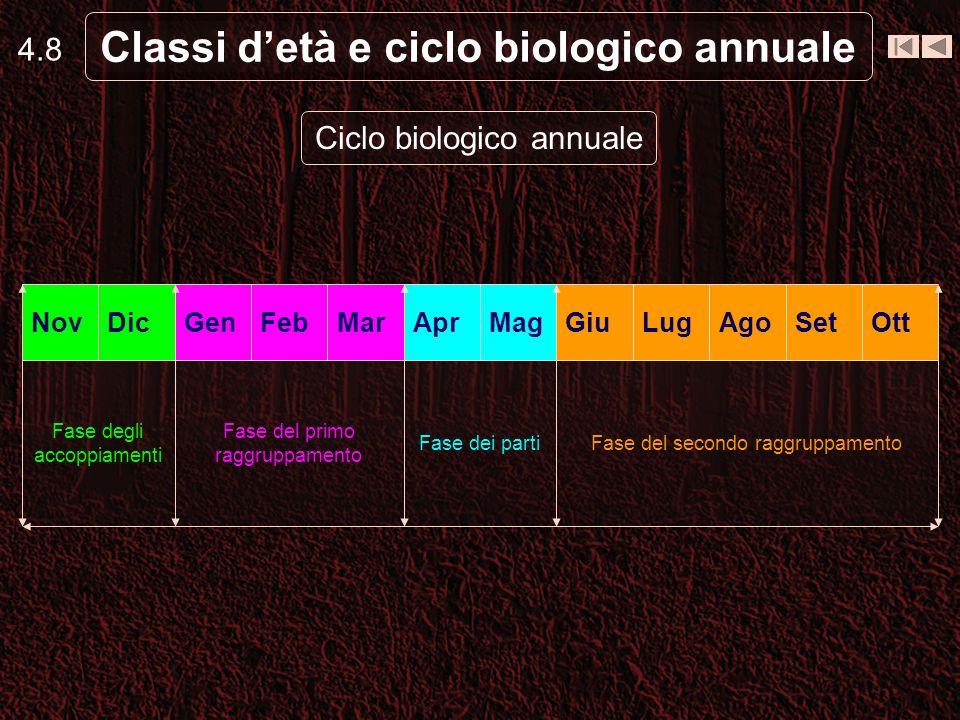 Classi d'età e ciclo biologico annuale