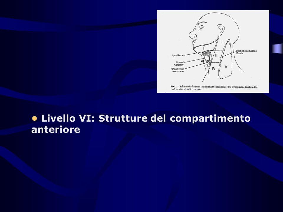 • Livello VI: Strutture del compartimento anteriore