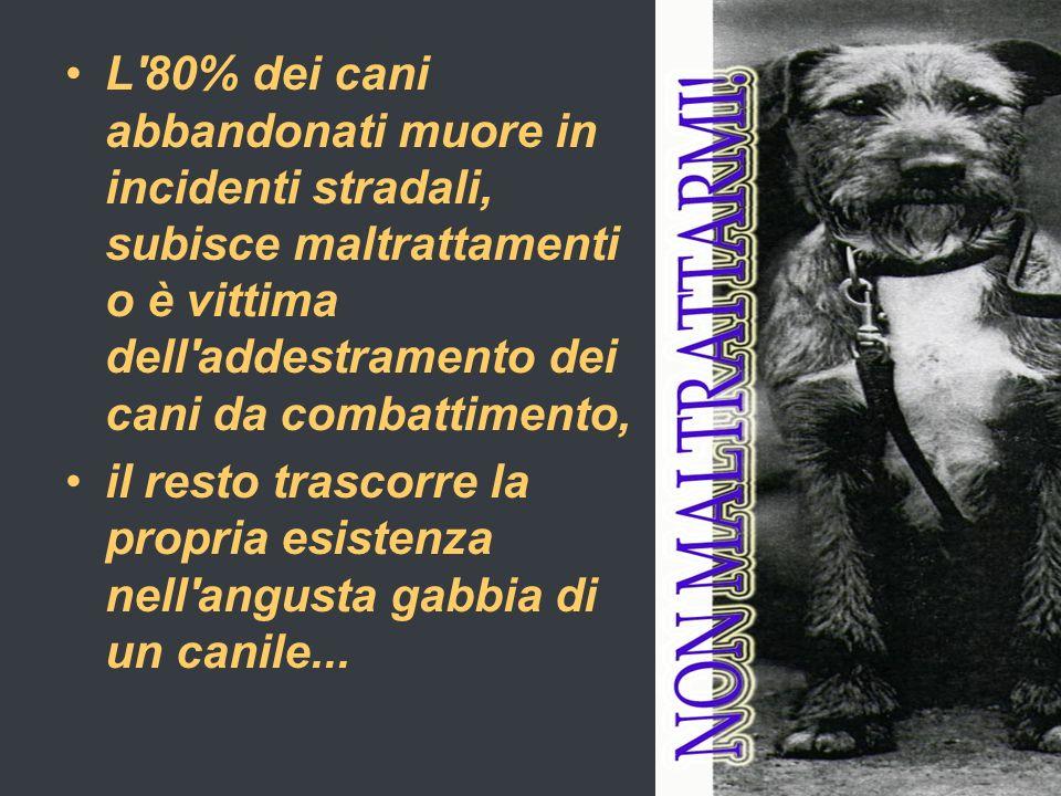 L 80% dei cani abbandonati muore in incidenti stradali, subisce maltrattamenti o è vittima dell addestramento dei cani da combattimento,