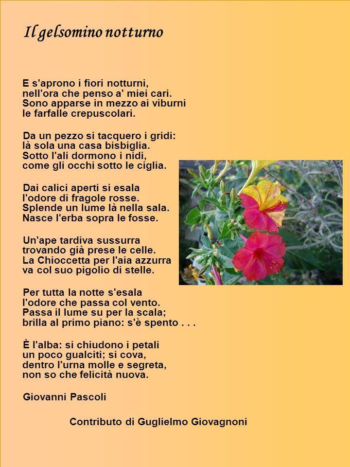 Il gelsomino notturno E s aprono i fiori notturni, nell ora che penso a miei cari. Sono apparse in mezzo ai viburni le farfalle crepuscolari.