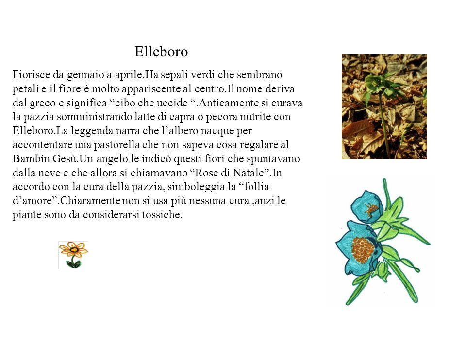 Elleboro