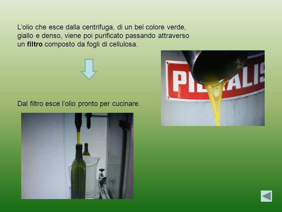 L'olio che esce dalla centrifuga, di un bel colore verde, giallo e denso, viene poi purificato passando attraverso un filtro composto da fogli di cellulosa.