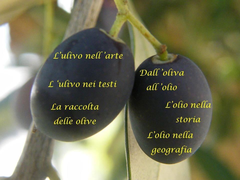 L'ulivo nell 'arte Dall 'oliva. all 'olio. L 'ulivo nei testi. L'olio nella. storia. La raccolta.