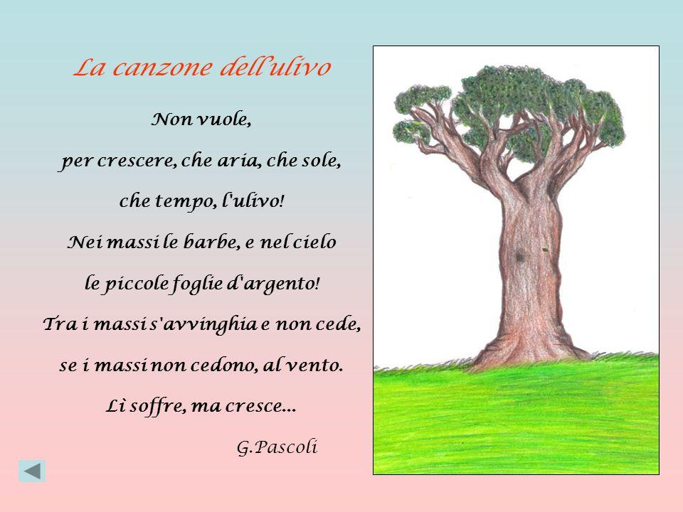 La canzone dell'ulivo Non vuole, per crescere, che aria, che sole,