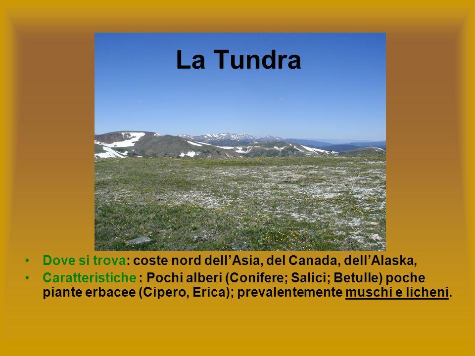 La Tundra Dove si trova: coste nord dell'Asia, del Canada, dell'Alaska,
