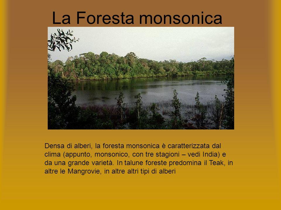 La Foresta monsonica