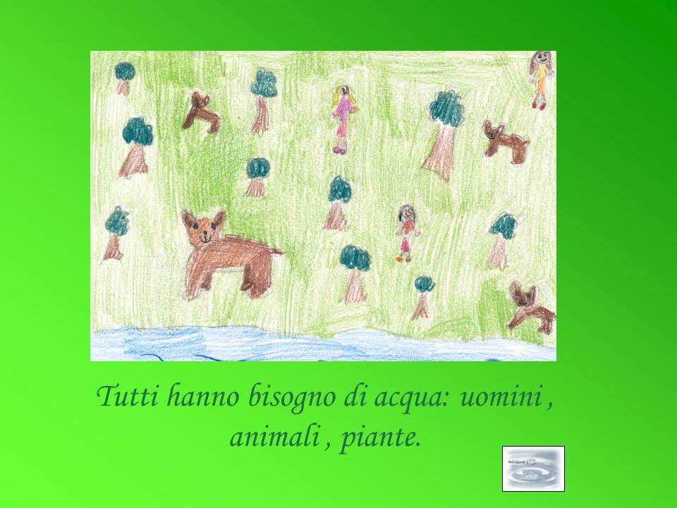 Tutti hanno bisogno di acqua: uomini , animali , piante.