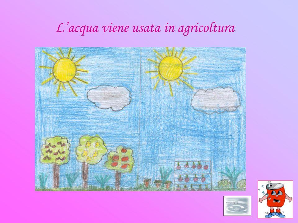 L'acqua viene usata in agricoltura