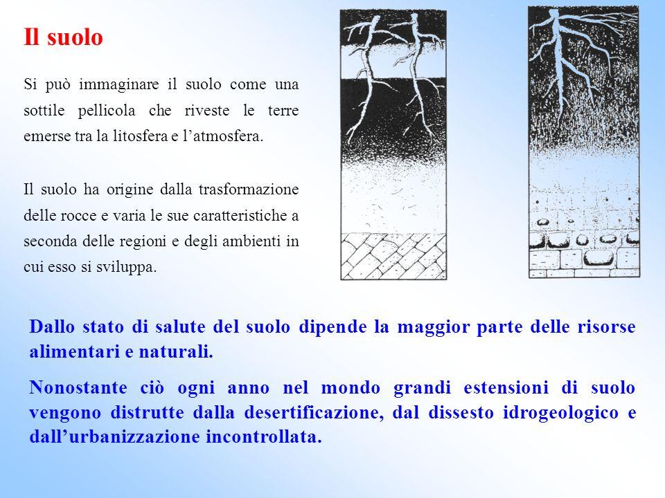 Il suolo Si può immaginare il suolo come una sottile pellicola che riveste le terre emerse tra la litosfera e l'atmosfera.