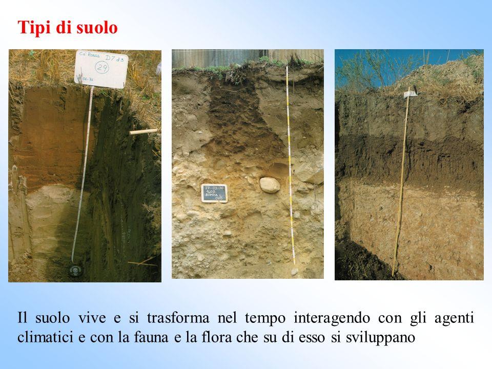 Tipi di suolo Il suolo vive e si trasforma nel tempo interagendo con gli agenti climatici e con la fauna e la flora che su di esso si sviluppano.