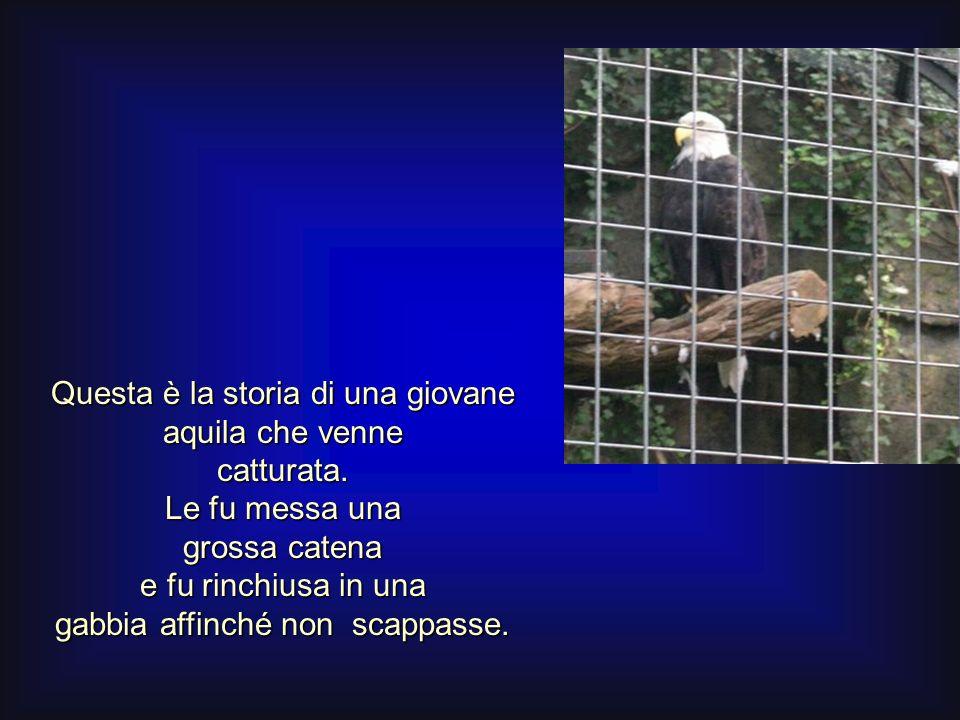 Questa è la storia di una giovane aquila che venne catturata.