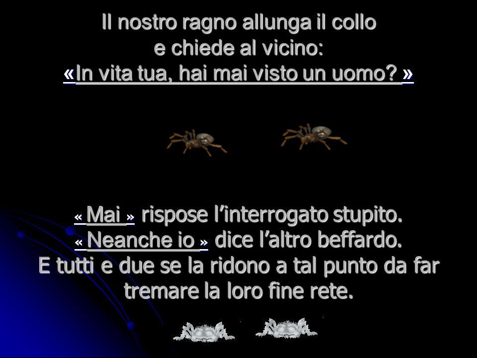 Il nostro ragno allunga il collo e chiede al vicino: «In vita tua, hai mai visto un uomo »