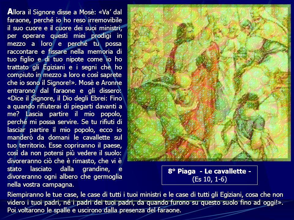 8° Piaga - Le cavallette -