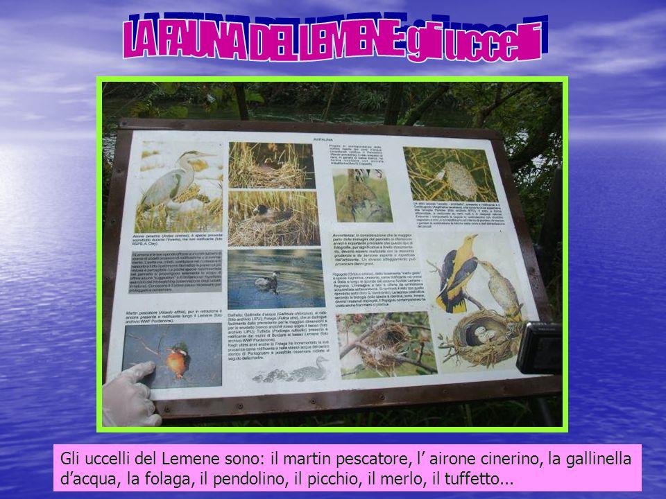 LA FAUNA DEL LEMENE: gli uccelli