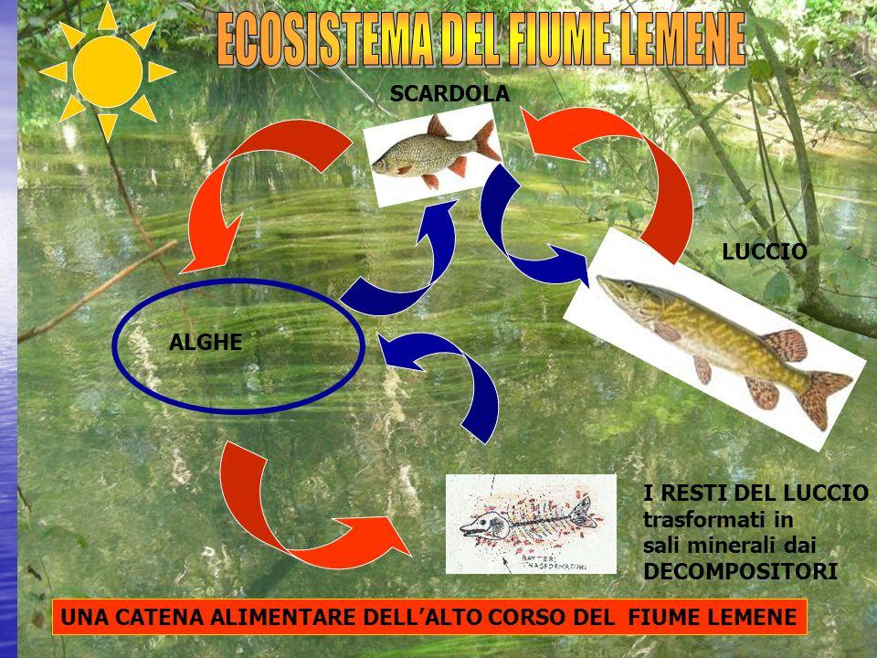 ECOSISTEMA DEL FIUME LEMENE
