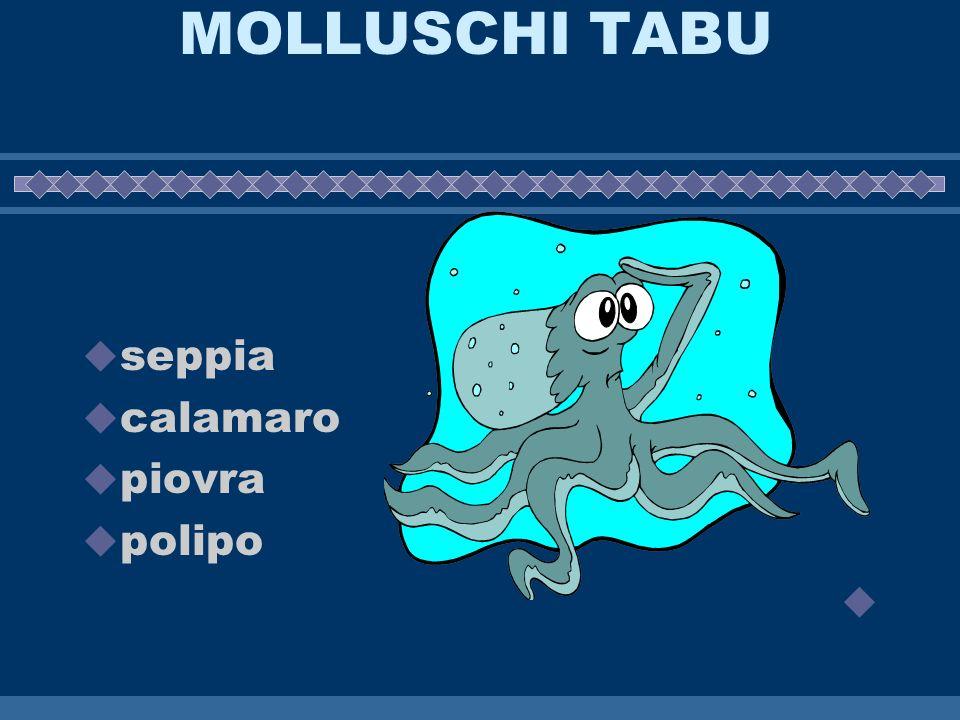 MOLLUSCHI TABU seppia calamaro piovra polipo