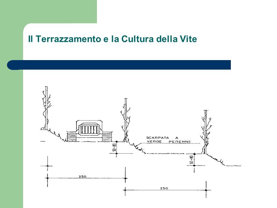 Il Terrazzamento e la Cultura della Vite