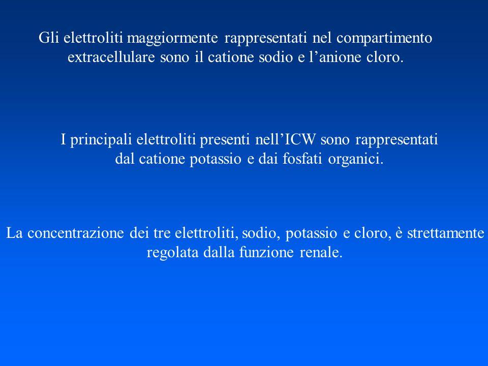 Gli elettroliti maggiormente rappresentati nel compartimento