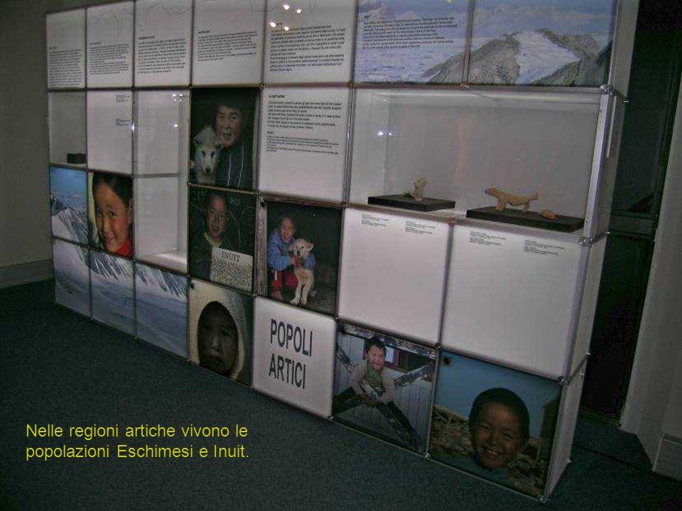 Nelle regioni artiche vivono le popolazioni Eschimesi e Inuit.