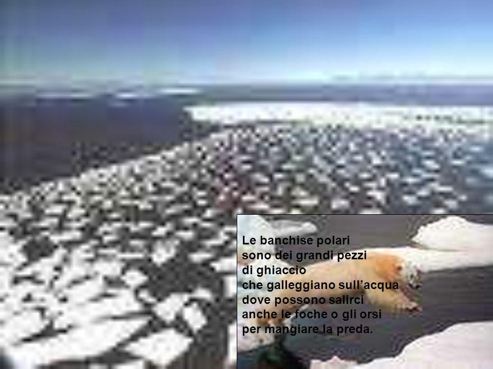 Le banchise polari sono dei grandi pezzi. di ghiaccio. che galleggiano sull'acqua. dove possono salirci.