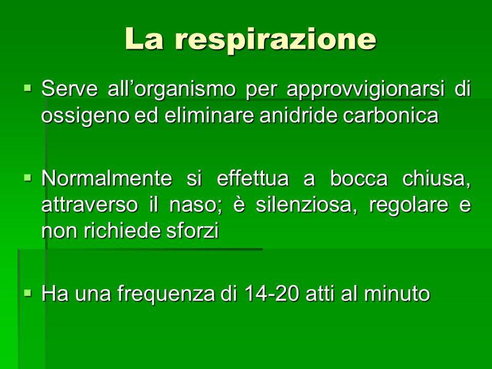 La respirazione Serve all'organismo per approvvigionarsi di ossigeno ed eliminare anidride carbonica.
