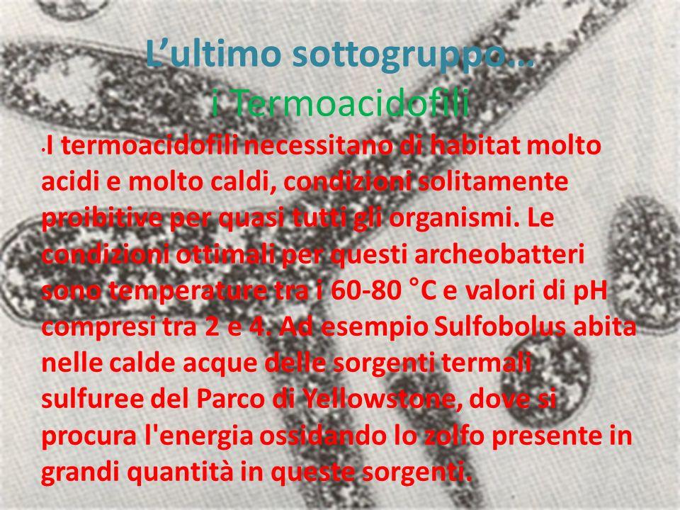 L'ultimo sottogruppo… i Termoacidofili