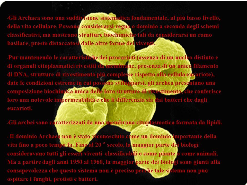 Gli Archaea sono una suddivisione sistematica fondamentale, al più basso livello, della vita cellulare. Possono considerarsi regno o dominio a seconda degli schemi classificativi, ma mostrano strutture biochimiche tali da considerarsi un ramo basilare, presto distaccatosi dalle altre forme dei viventi.