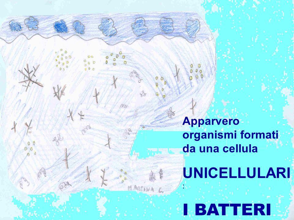 Apparvero organismi formati da una cellula