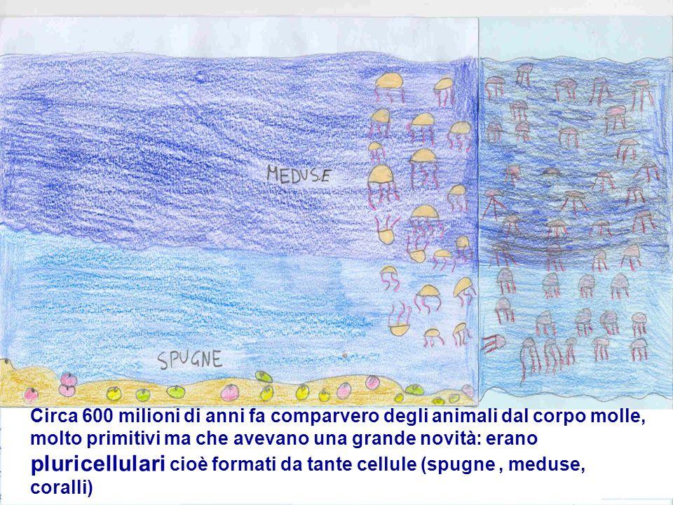 Circa 600 milioni di anni fa comparvero degli animali dal corpo molle, molto primitivi ma che avevano una grande novità: erano pluricellulari cioè formati da tante cellule (spugne , meduse, coralli)