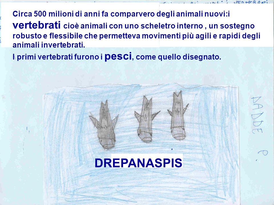 Circa 500 milioni di anni fa comparvero degli animali nuovi:i vertebrati cioè animali con uno scheletro interno , un sostegno robusto e flessibile che permetteva movimenti più agili e rapidi degli animali invertebrati.