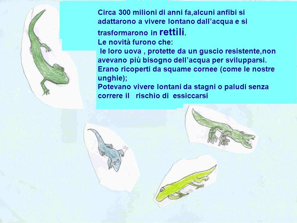 Circa 300 milioni di anni fa,alcuni anfibi si adattarono a vivere lontano dall'acqua e si trasformarono in rettili.