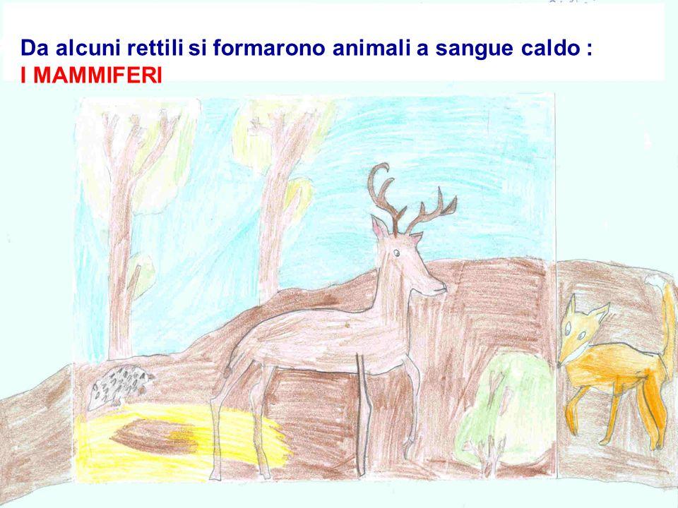 Da alcuni rettili si formarono animali a sangue caldo :